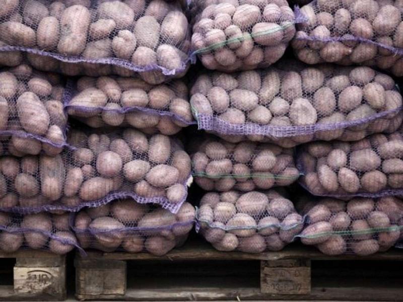 Картофель оптом от производителя 11ркг.